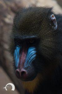 Affen-005