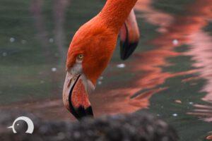 Vögel-011