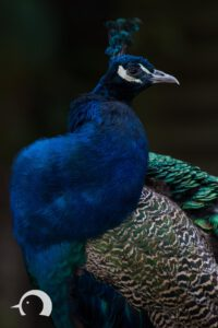 Vögel-007