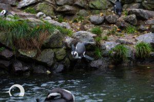 Pinguine-003