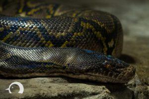 Reptilien-002