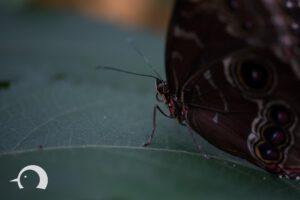 Schmetterlinge-009
