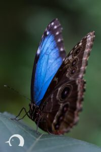 Schmetterlinge-012