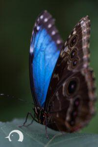 Schmetterlinge-004