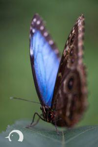 Schmetterlinge-006