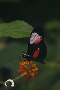 Schmetterlinge-011