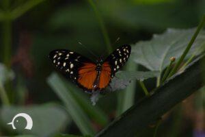 Schmetterlinge-008
