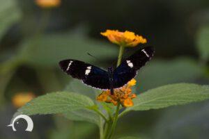 Schmetterlinge-007