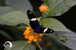 Schmetterlinge-003