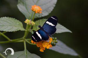Schmetterlinge-002
