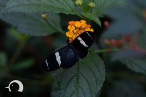 Schmetterlinge-001
