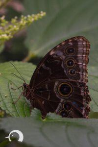 Schmetterlinge-005