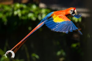 Vögel-002
