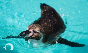 Pinguine-002