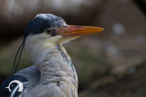 Vögel-033