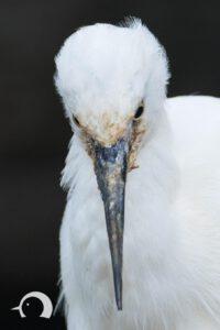 Vögel-035
