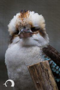 Vögel-024